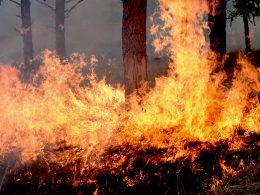 Illegal Alien Attempts to Burn Down ENTIRE State, Biden Team SILENT