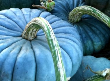 If You Spot a Blue Pumpkin on a Porch, THIS is What it Means